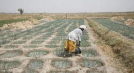Dialogue politique «Sans terres, pas d'avenir !» au Parlement fédéral, le 21 mars prochain