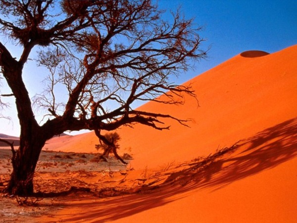 desert_arbre_careme2011