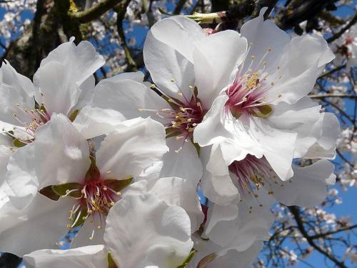 Des fleurs blanches pour le christ protestation for Redaction sur le respect