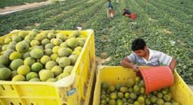 Le Pape célèbre les coopératives agricoles