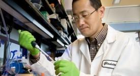 Nobel de médecine : coup de frein sur la recherche embryonnaire?