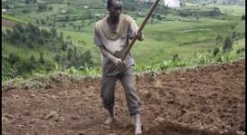 Soutenir les paysans pour lutter contre la faim