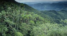 Vers un synode pan-amazonien?