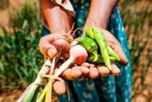 Caritas : une semaine d'action pour éradiquer la faim