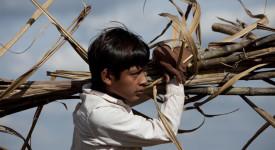 Mexique – Le travail des enfants en hausse