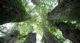 Quand les arbres parlent dans le silence d'une église