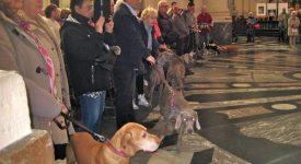 Chiens, chats, chevaux et… chèvre pour la messe de Saint-Hubert à la cathédrale