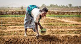 Iles de paix: une main tendue vers le Bénin