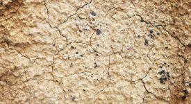 2,4 millions de Kenyans nécessitent une aide urgente en raison de la sécheresse