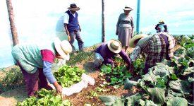 La résilience des populations andines