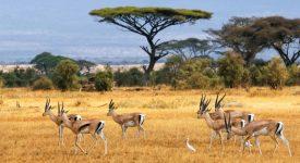 Kenya : les évêques saluent la réconciliation Kenyatta-Odinga