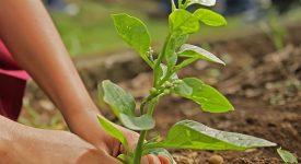 Aux Philippines, 25.000 arbres plantés en souvenir des victimes de la guerre contre la drogue