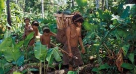 Synode pour l'église en Amazonie