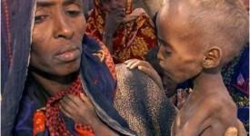 Oxfam : cinq gestes pour une politique alimentaire équitable
