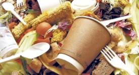 Gaspillage alimentaire mondial : un vrai scandale !
