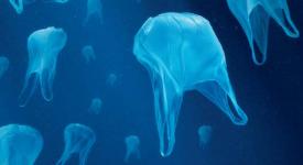Les Européens appelés à limiter l'usage des sacs en plastique