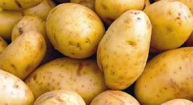 Belgique : Trop de patates tue la patate