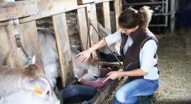 Entraide : Des suppléments d'âme à la ferme