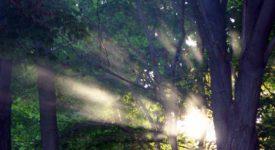 Spiritualités comparées (6/6) – Epilogue : le Dieu indicible