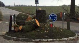 L'arbre de la justice à Court-Saint-Etienne tronçonné par des vandales