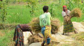 Un colloque international sur les femmes rurales