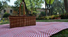 Parc Maximilien: un sit-nic et une plateforme en mouvement