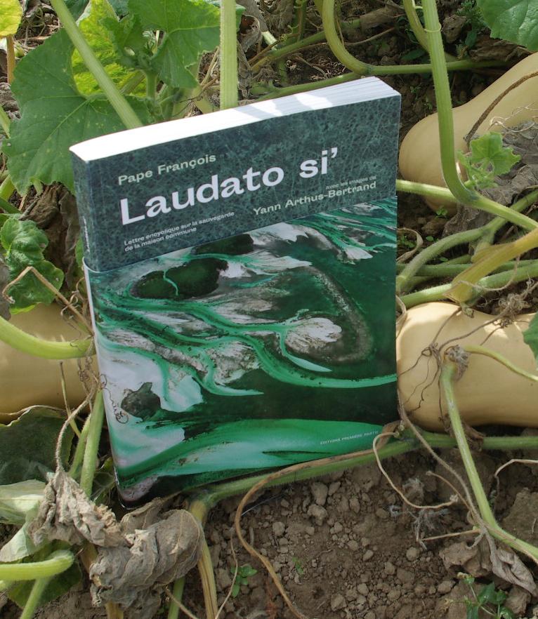 Une semaine de festivités pour conclure l'Année Laudato si'
